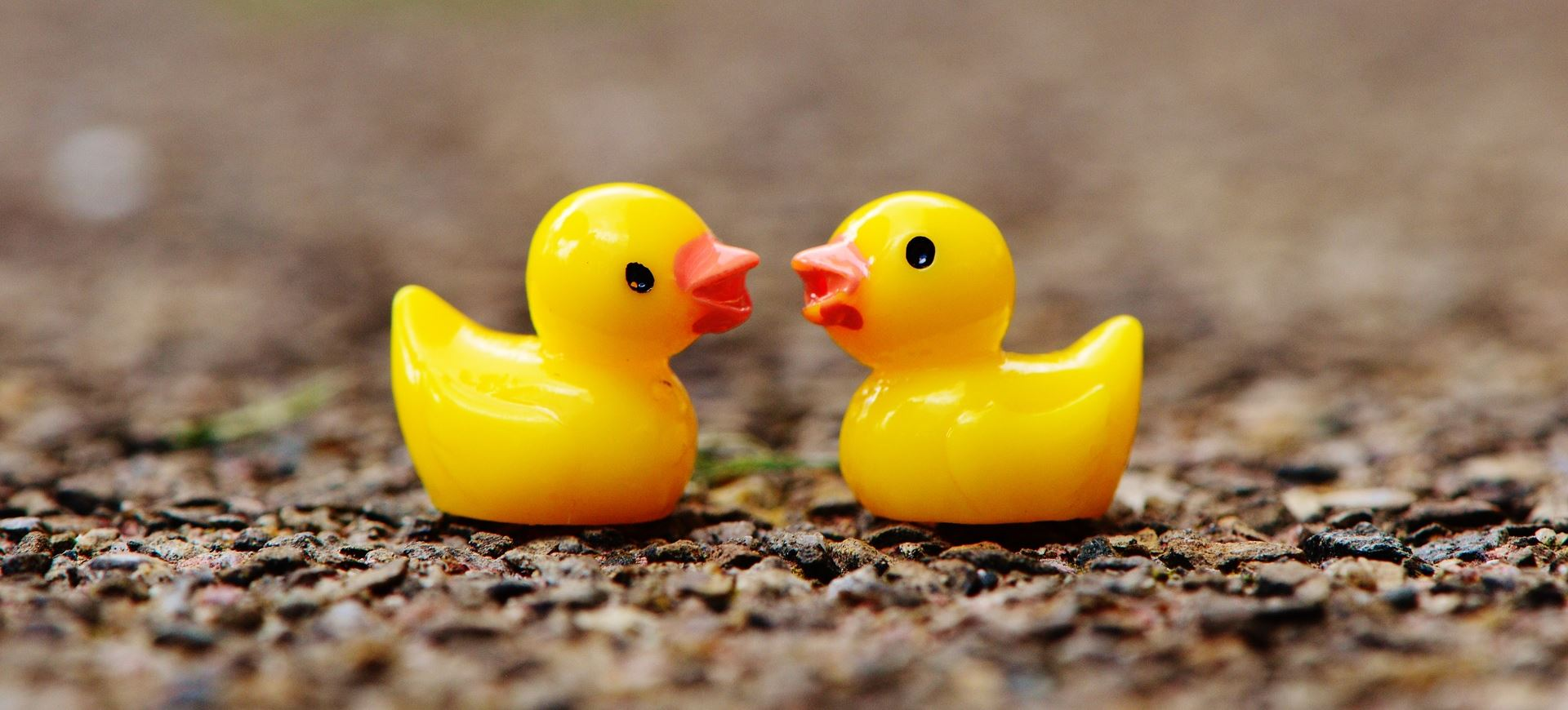 A pair of ducks, not programming
